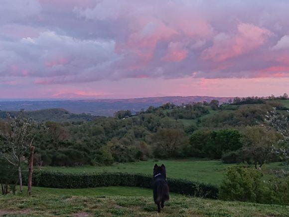 tramontocane